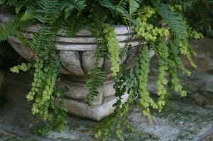 Stone containers often suit feature plants that make a statement.